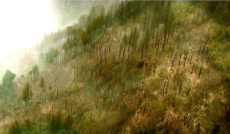 KOIN 6 NEWS PHOTO - Eagle Creek Fire restoration could be slowed by wind, KOIN 6 NEWS reports.