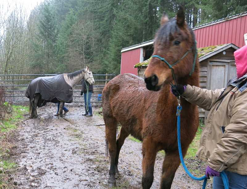 Eight of the nine horses rescued were considered underweight. Citizen concerns about the living conditions prompted a Humane Society investigation and eventual rescue.
