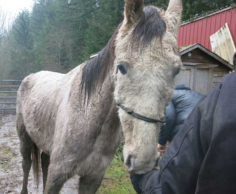 Nine horses that were considered 'neglected' were taken from a Molalla home on S. Sawtell Road the morning of Dec. 19.