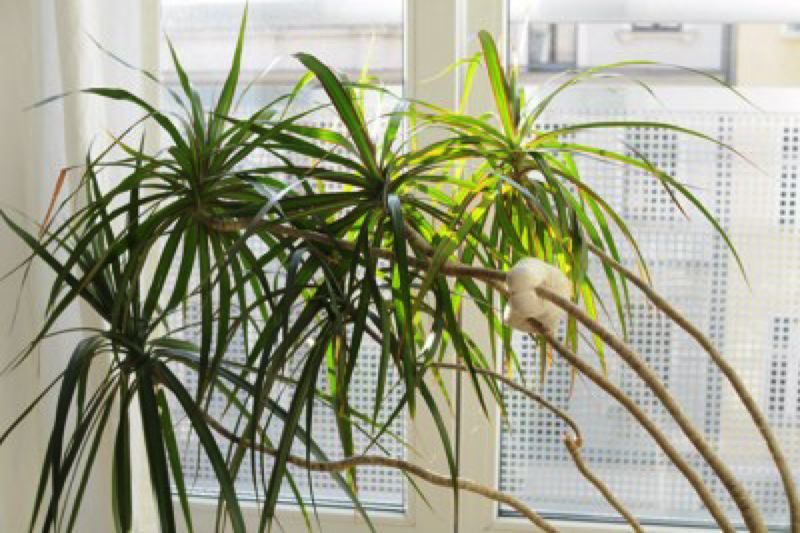 COURTESY: STEPHANIE VACHER, FLICKRCC. - Getting a few houseplants is one way to start cleaning up the air quality inside your home.