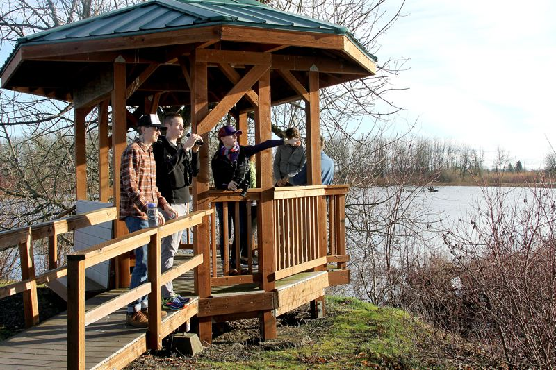 PAMPLIN MEDIA GROUP: JOHN SCHRAG - Fernhill Wetlands is a popular destination for birders who come to see rare migratory birds. The 700-acre property on the edge of Forest Grove, is owned by Clean Water Services and managed in partnership with the city and Fernhill Wetlands Council.