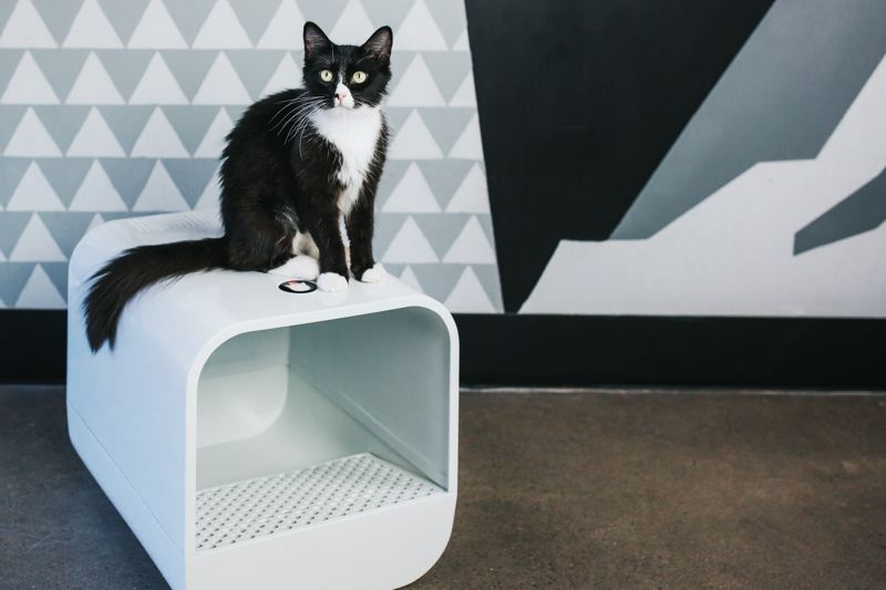 PHOTOS: COURTESY THE GRAND POOBOX - At Purrington's Cat Lounge, a shelter cat named Mr. Cat, models a prototype of Courtney Karsted's Grand PooBox invention, designed to prevent cats from tracking litter outside the box.
