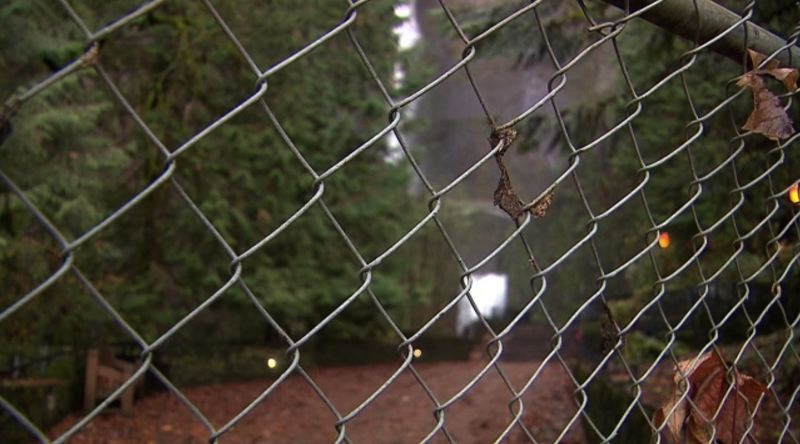 KOIN 6 NEWS PHOTO - Visitors to Multnomah Falls keep sneaking past this chain link fence, which blocks access to the lower viewing platform for Multnomah Falls.