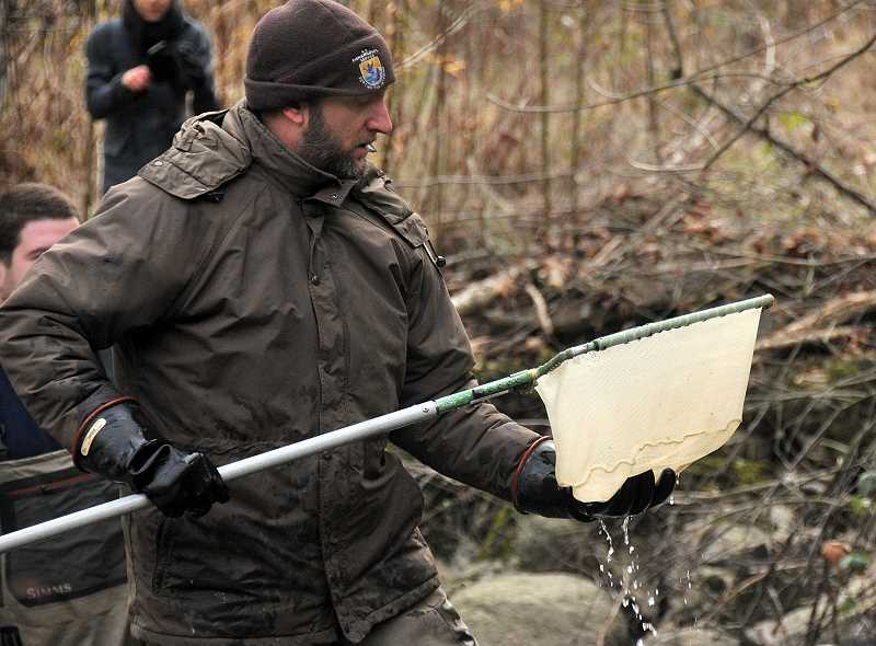 REVIEW PHOTO: VERN UYETAKE - U.S. Fish and Wildlife Service biologist Brian Davis checks his net to see what kind of fish he captured after it was stunned using electrofishing.