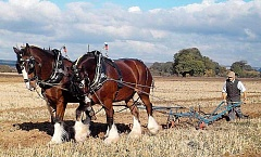 Photo Credit: SUBMITTED PHOTO - At Pioneer Farmstead Day you can watch Living History Demonstrations on things such as plowing with a horse.