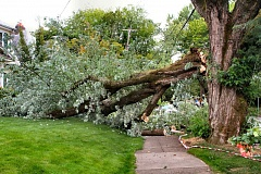 Photo Credit: DAVID F. ASHTON - After a main attachment of this Eastmoreland silver maple tree failed, major limbs came crashing down.