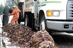 Photo Credit: NEWS-TIMES PHOTO: DOUG BURKHARDT - Autumn leaves are beginning to fall, and the city of Forest Grove is about to launch its 2014 leaf pickup program.