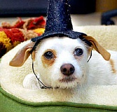 Photo Credit: SUBMITTED PHOTO - Make sure any pet costumes are safe and non-restrictive.