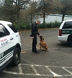 Photo Credit: CLACKAMAS COUNTY SHERIFF'S OFFICE - Sgt. Bradley O'Neil and his K9 partner Nero are shown here at a training session; the pair helped in the arrest of a woman Monday who showed up at that training session with an active warrant.