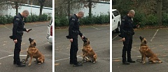 Photo Credit: PHOTOS COURTESY: CCSO - Sgt. Bradley ONeil trains with his canine deputy Nero.