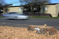 Photo Credit: TIMES PHOTO: MILES VANCE - Traffic speeds along Southwest Farmington Road just east of Murray Road past the stump of a tree recently removed in preparation for the Farmington Road improvement project.