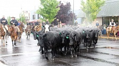 CENTRAL OREGONIAN FILE PHOTO - The cattle drive, held Wednesday evening, has long been one of the popular attractions leading up to the rodeo.