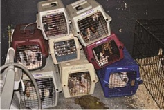 SUBMITTED - Dogs were found crowded in crates stacked on top of each other at Willamette Animal Rescue in January 2013.