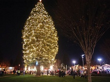 OUTLOOK PHOTO: JOSH KULLA - The city of Gresham's 60-foot ponderosa pine casts its glow across the Arts Plaza downtown following the Spirit of Christmas event Saturday.