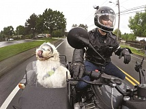 TIMES PHOTO: JAIME VALDEZ - Sam, a 2-year-old golden retriever/poodle mix, and Scot Brooks have been riding through Tigard for the past year.
