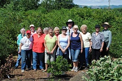 NEWS-TIMES PHOTOS: STEPHANIE HAUGEN - Mambers of the Gales Creek Gardening club have been meeting and planting together since 1976.