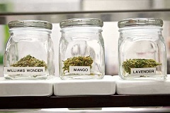 REVIEW FILE PHOTO - Lake Oswego voters will decide in November whether to keep the city's ban on the sale of marijuana in place.