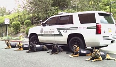 PHOTO COURTESY: CCSO - A photo of the Clackamas County Sheriff's Office dogs donning their vests.