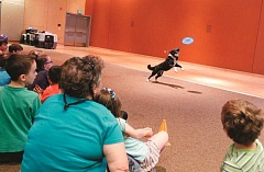 TIMES PHOTO: JONATHAN HOUSE - Parents and children watch as Rerun grabs a frisbee during a visit from Border Collie International to Tigard Library.