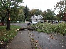 COURTESY OF SHERWOOD POLICE DEPARTMENT - The Sherwood Police Facebook page praised residents of the Lavender Avenue and Daylily Street for their response to a downed tree. They came out with tools in hand and helped remove the tree from the road. We are proud to serve such a great community.
