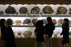 CHASE ALLGOOD - Sela Nixon, 9, far right, passes by cases full of petrified trees with other All Saints Elementary fourth graders at the Rice Northwest Museum of Rocks and Minerals.
