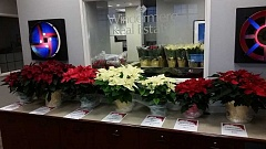 The Windermere Lake Oswego office is selling poinsettias Friday, Dec. 9, from noon until they are gone, as a benefit for Windermere Foundation, which raises money to support low-income children and families. White, red and Jingle bell (variegated) poinsettias will be available, in three sizes, ranging in price from $10 to $25. Stop by 220 A Ave. in downtown Lake Oswego, as close to noon as possible, because these will go quickly. To pre-order email Kerri Miller at millerks@windermere.com.