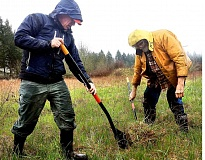 AARON CURRAN KNAPP - Bob Hansen (left) and Steve Northway dig out a tall dogbane plant in a mucky field in Newberg. They plan to replant tall dogbane species alongside other populations in the Willamette Valley to spur the plant to reproduce.