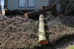 REVIEW PHOTO: ANTHONY MACUK - Neighbors and residents were caught off guard by the removal of 82 trees last week from the One Jefferson Parkway apartment complex.