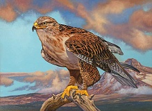 SUBMITTED PHOTO - Last years winner, Craig Fairbert, created this painting of a  ferruginous hawk
