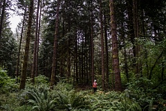 PAMPLIN MEDIA GROUP FILE PHOTO  - Forests outside of Portland are much cooler than built-up urban and suburban areas, which suffer from the urban heat island effect.